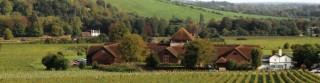 Denbies Picture from Denbies